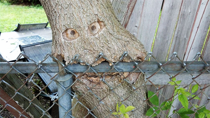 trees-refuse-to-give-up-101-598416b37d168__700