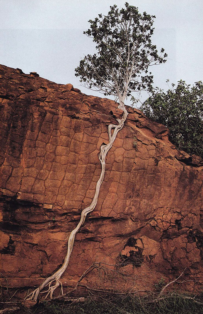 trees-refuse-to-give-up-13-59830fe90cb2a__700