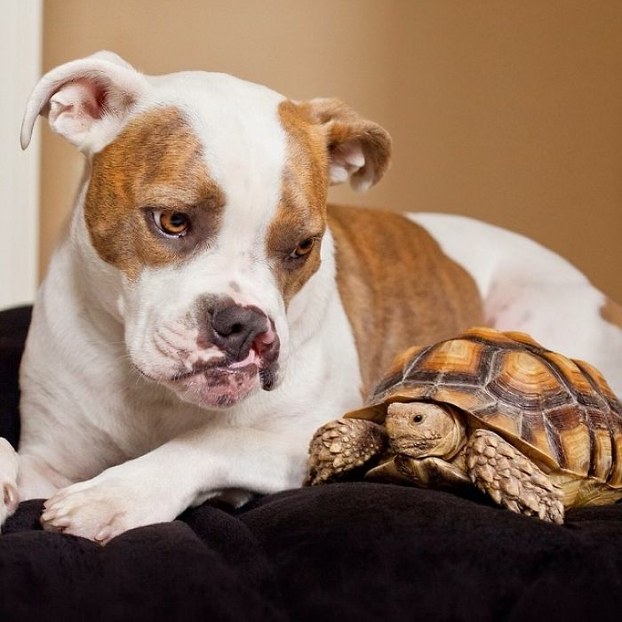 10-Photos-of-Puka-the-rescue-dog-and-Larry-the-turtle-to-make-your-day-59b78fe80dcd1__700
