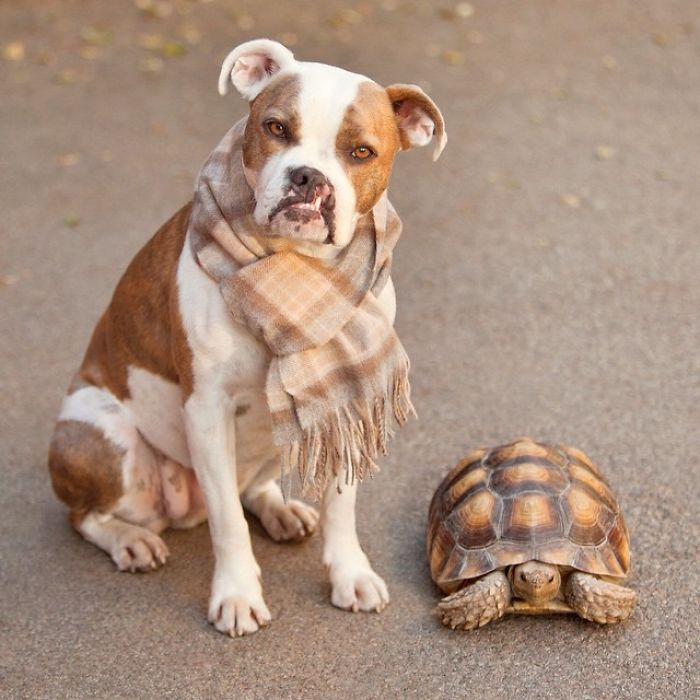 10-Photos-of-Puka-the-rescue-dog-and-Larry-the-turtle-to-make-your-day-59b78feeec66f__700