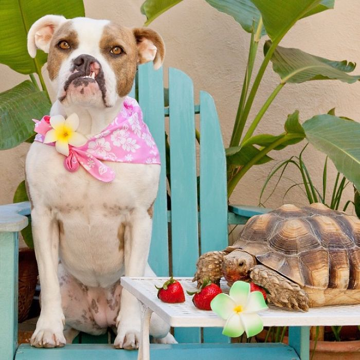 10-Photos-of-Puka-the-rescue-dog-and-Larry-the-turtle-to-make-your-day-59b78ff105ddf__700