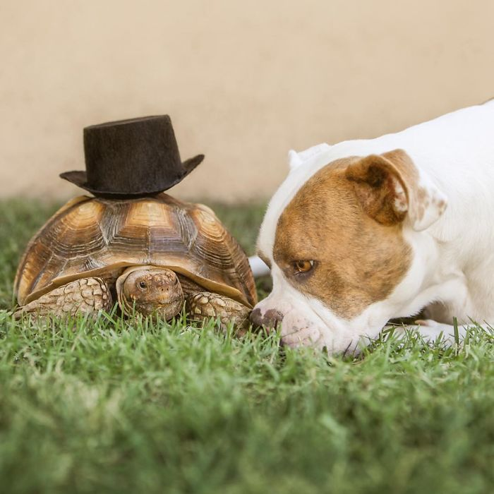 10-Photos-of-Puka-the-rescue-dog-and-Larry-the-turtle-to-make-your-day-59b78ff3e8e38__700