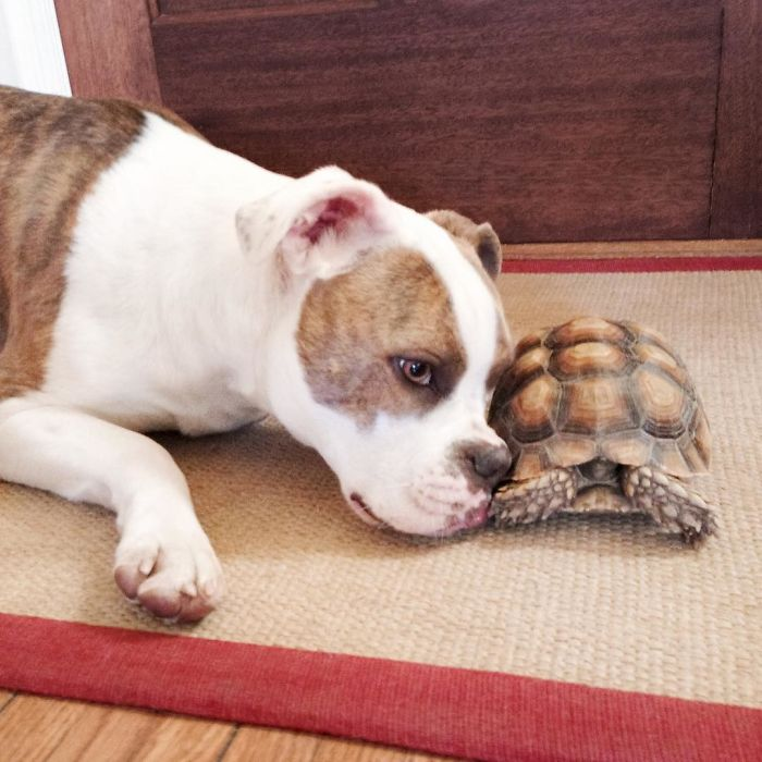 10-Photos-of-Puka-the-rescue-dog-and-Larry-the-turtle-to-make-your-day-59b78ffb09fad__700