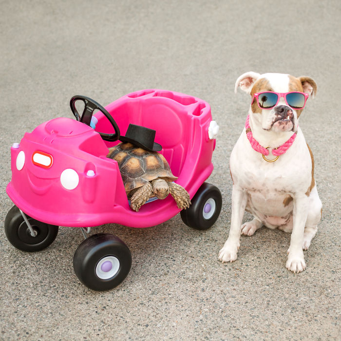 10-Photos-of-this-rescue-dog-and-her-turtle-to-make-your-day-59b6dfb3531a4__700