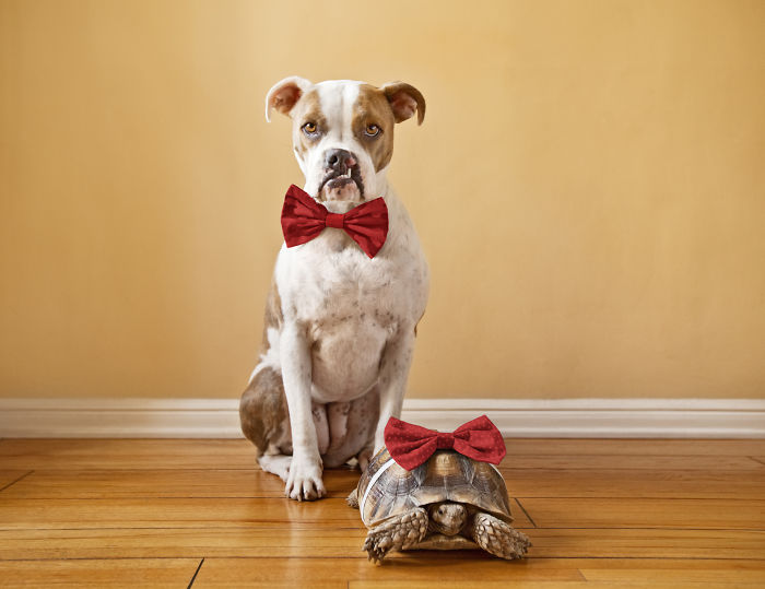 10-Photos-of-this-rescue-dog-and-her-turtle-to-make-your-day-59b6e00071aaa__700