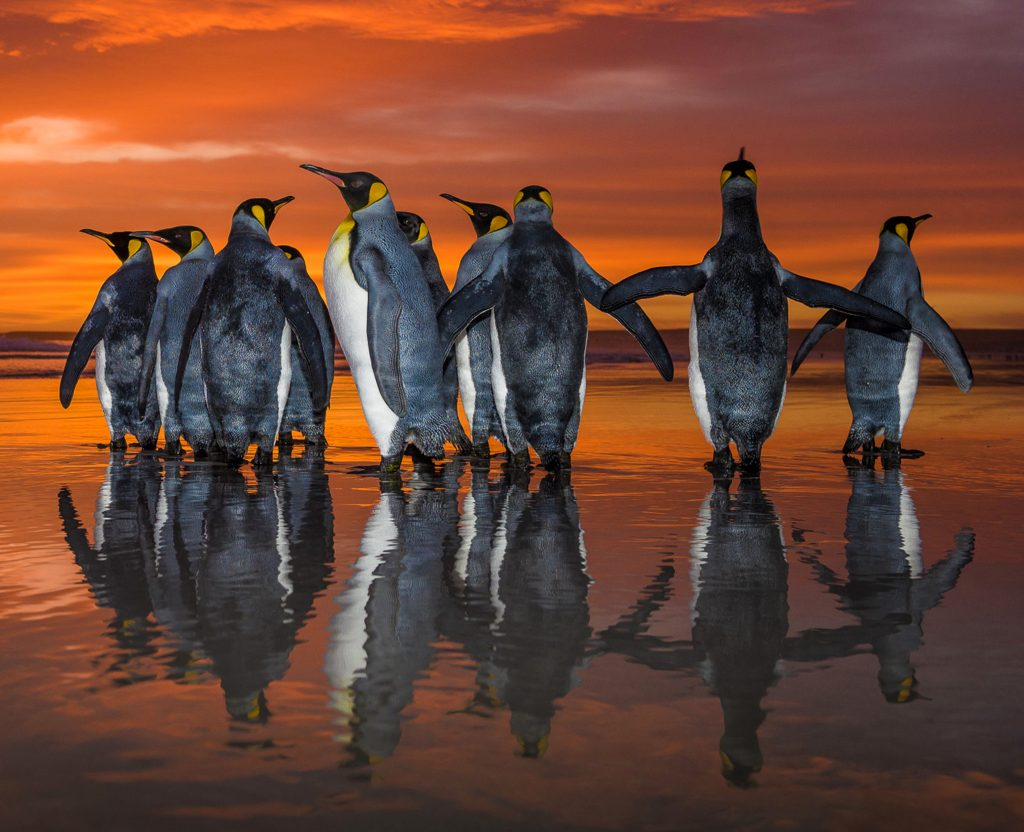 7_CATERS_penguins_08-1024x832