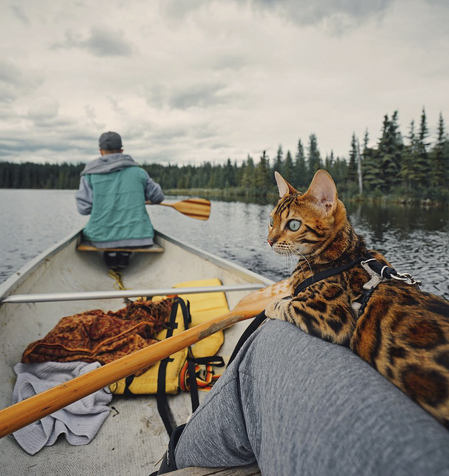 adventures-suki-the-cat-canada-25-59b2977dbfab1__880
