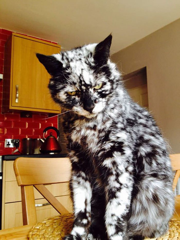 animals-with-unusual-fur-markings-16-59ae6da551934__700