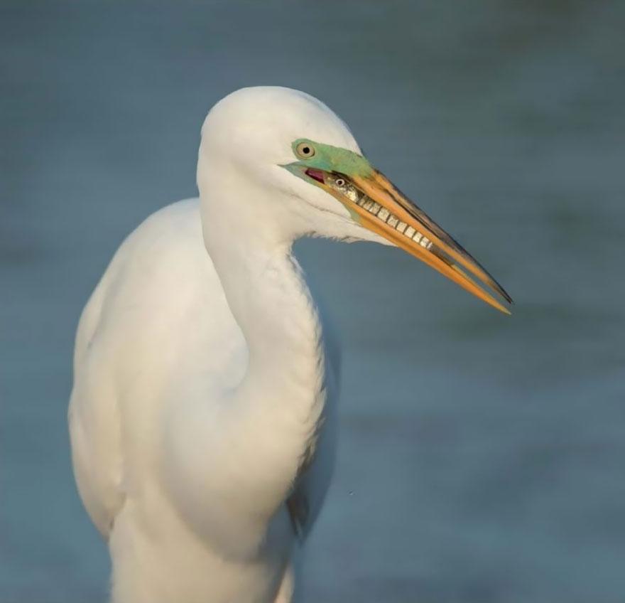 bird-photographer-of-the-year-2017-16-59acfcae63aeb__880
