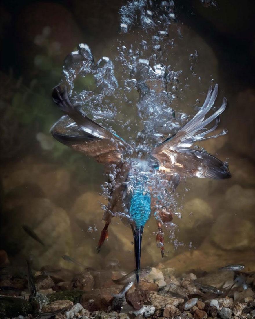 bird-photographer-of-the-year-2017-19-59acfcb2d4412__880