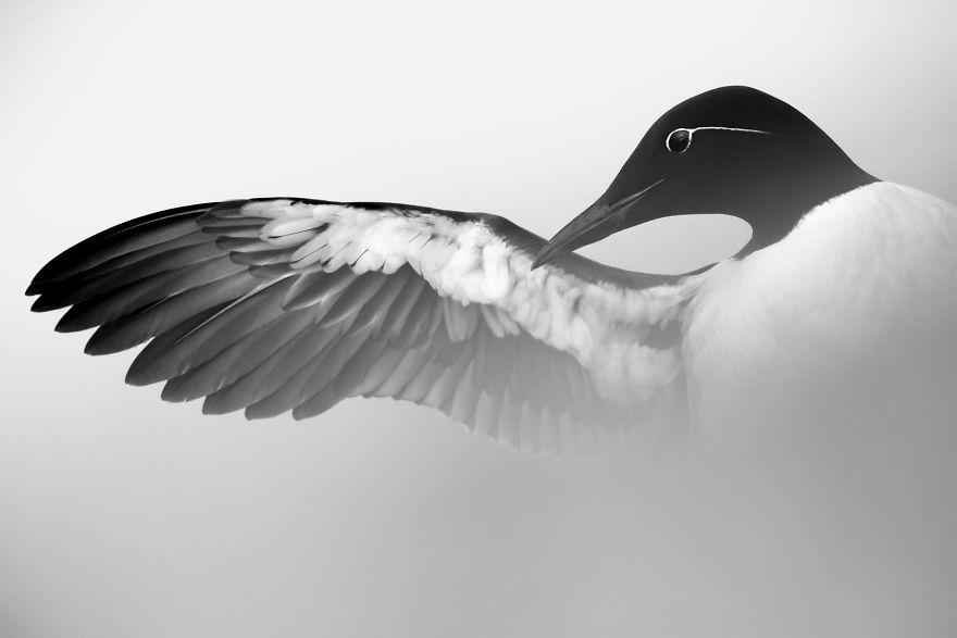 bird-photographer-of-the-year-2017-34-59ad0cfe65ec4-jpeg__880