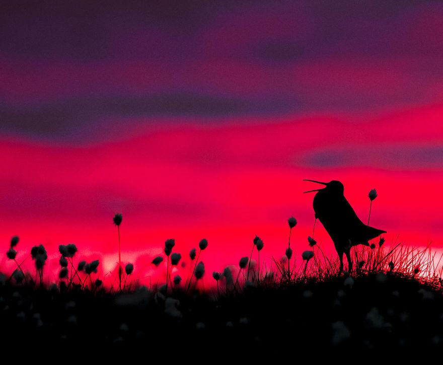 bird-photographer-of-the-year-2017-48-59ad107e83240-jpeg__880