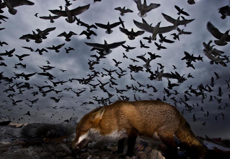 bird-photographer-of-the-year-2017-51-59ad10c0edc53-jpeg__880