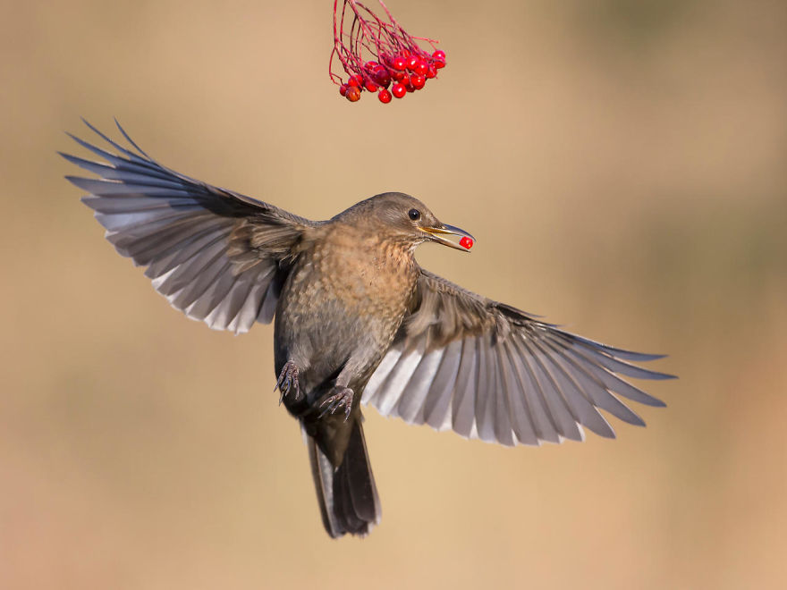 bird-photographer-of-the-year-2017-54-59ad1119667b3-jpeg__880