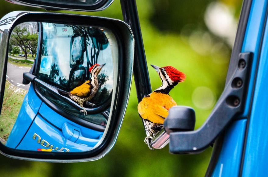 bird-photographer-of-the-year-2017-55-59ad112d05464-jpeg__880