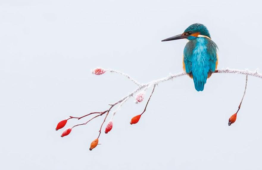 bird-photographer-of-the-year-2017-60-59ad11c905897__880