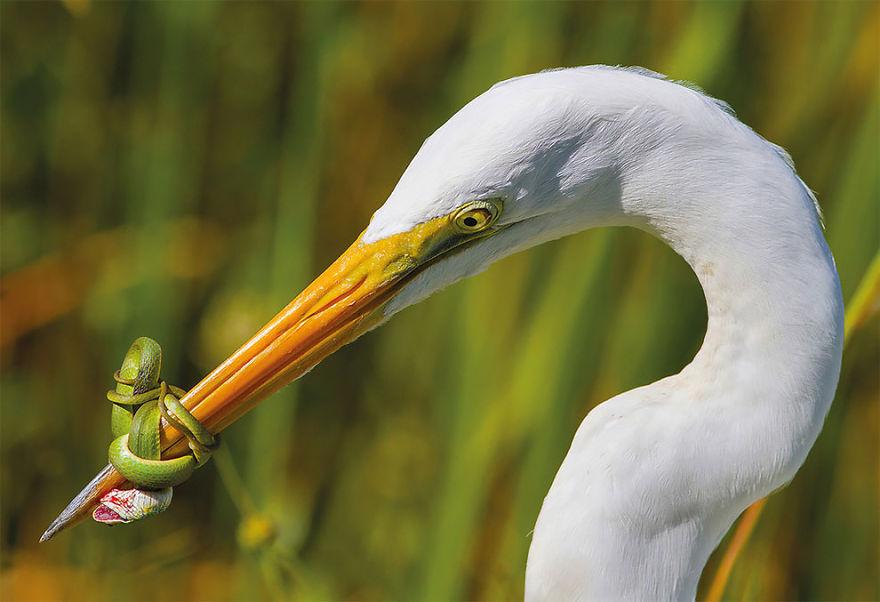 bird-photographer-of-the-year-2017-7-59acfc9ee1416__880