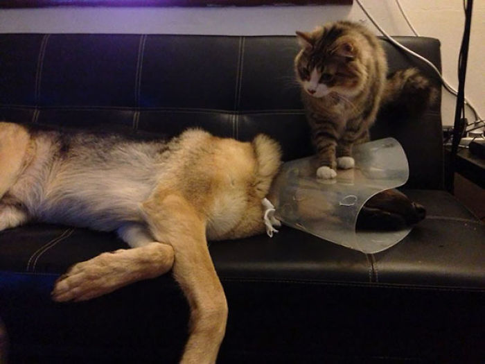 cats-dogs-not-getting-along-hate-living-together-1-59b10d56c70c2__700