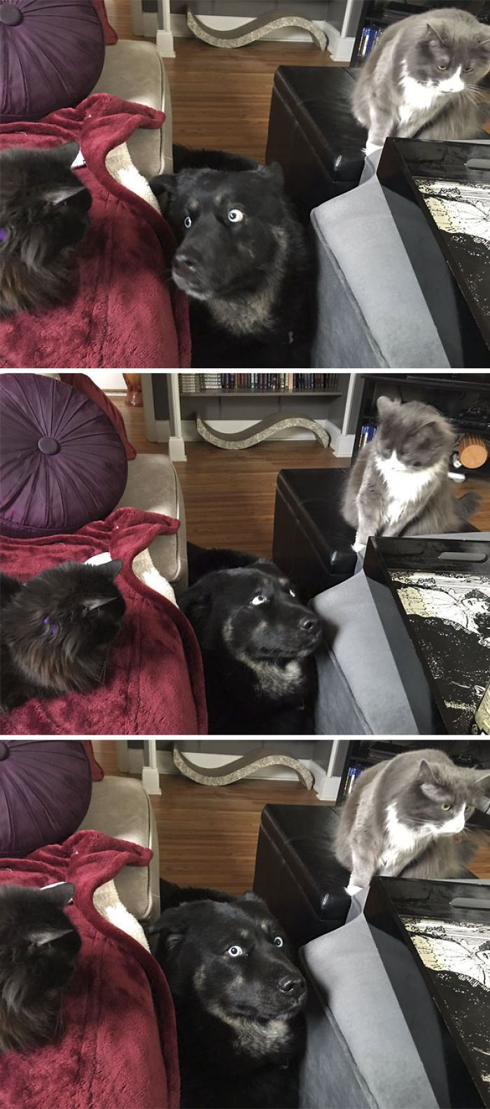 cats-dogs-not-getting-along-hate-living-together-3-59b1112825349__700