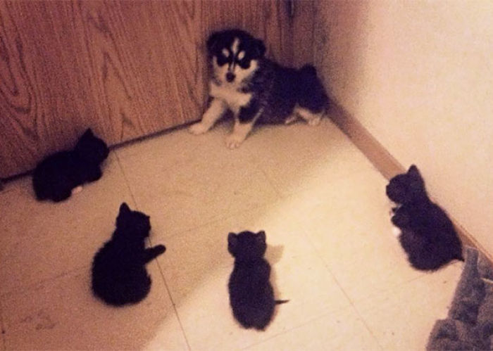 cats-dogs-not-getting-along-hate-living-together-34-59b2458c5aa23__700