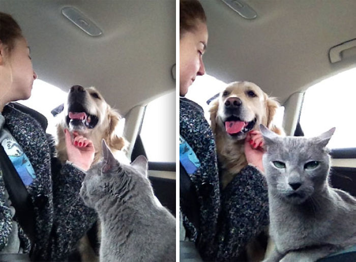 cats-dogs-not-getting-along-hate-living-together-39-59b257a554e7a__700