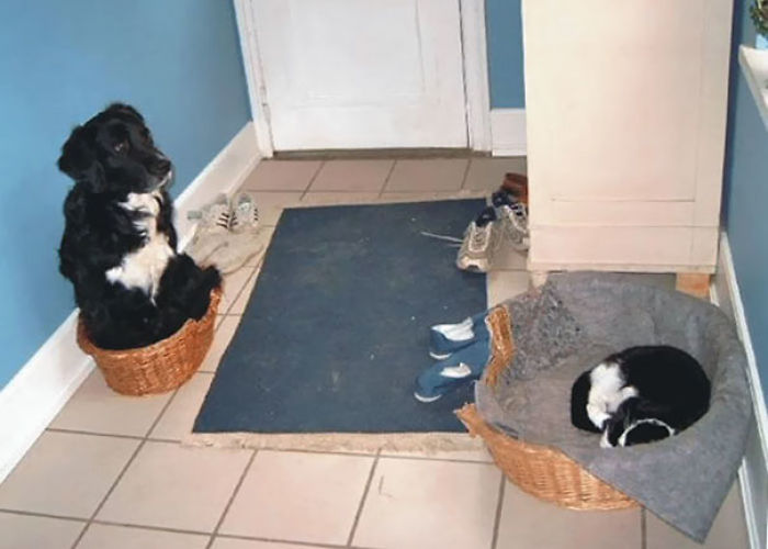 cats-dogs-not-getting-along-hate-living-together-44-59b262f14c13d__700