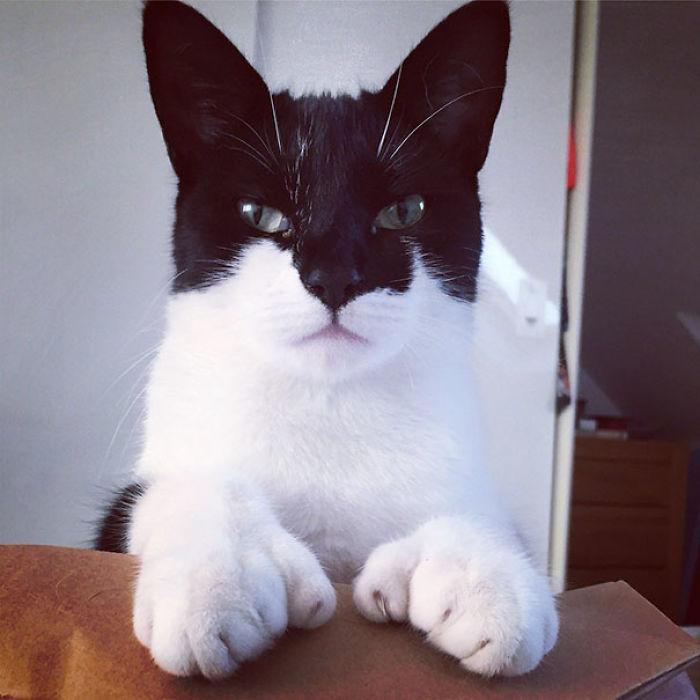 cats-with-unusual-fur-markings-56-59b8f026340f0__700