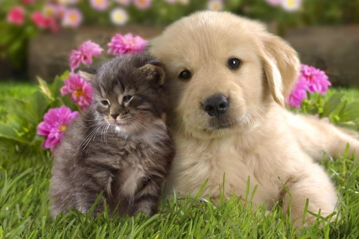 Dog-and-Cat-59b069281c856__700