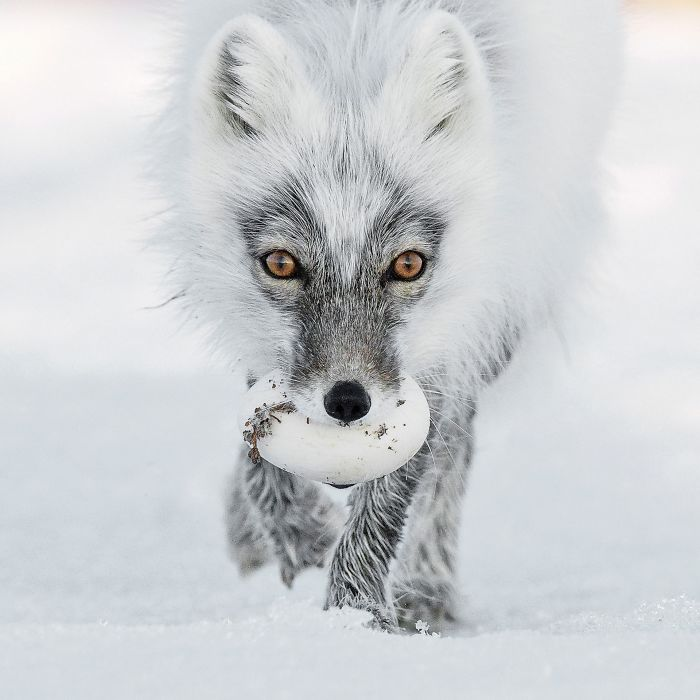 finalists-wildlife-photographer-of-the-year-2017-13-59ba29530f947__700