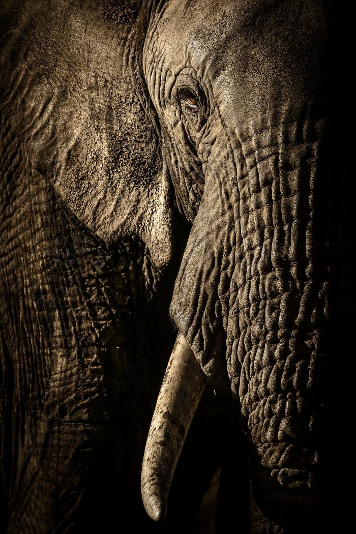 finalists-wildlife-photographer-of-the-year-2017-4-59ba29613e834__700