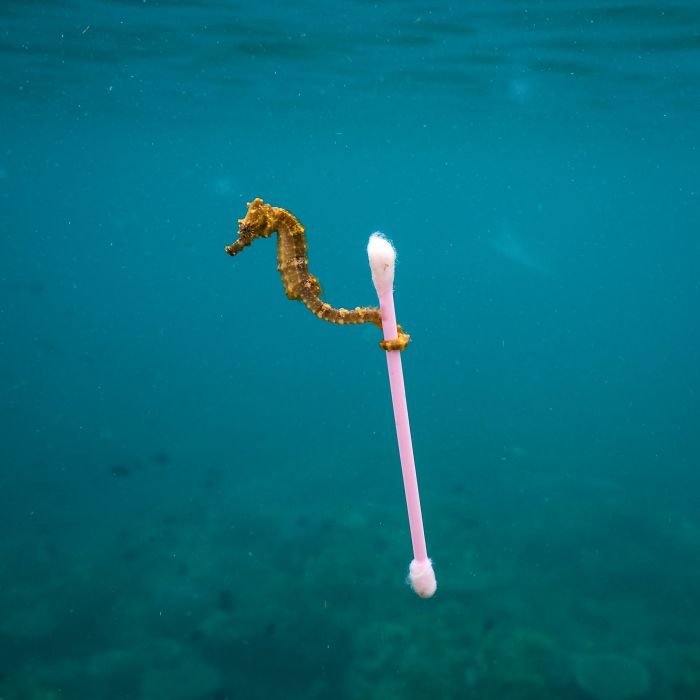 finalists-wildlife-photographer-of-the-year-2017-8-59ba294270cb7__700