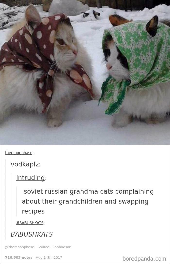 funny-cat-pics-tumblr-10-5992e78ce1856__700