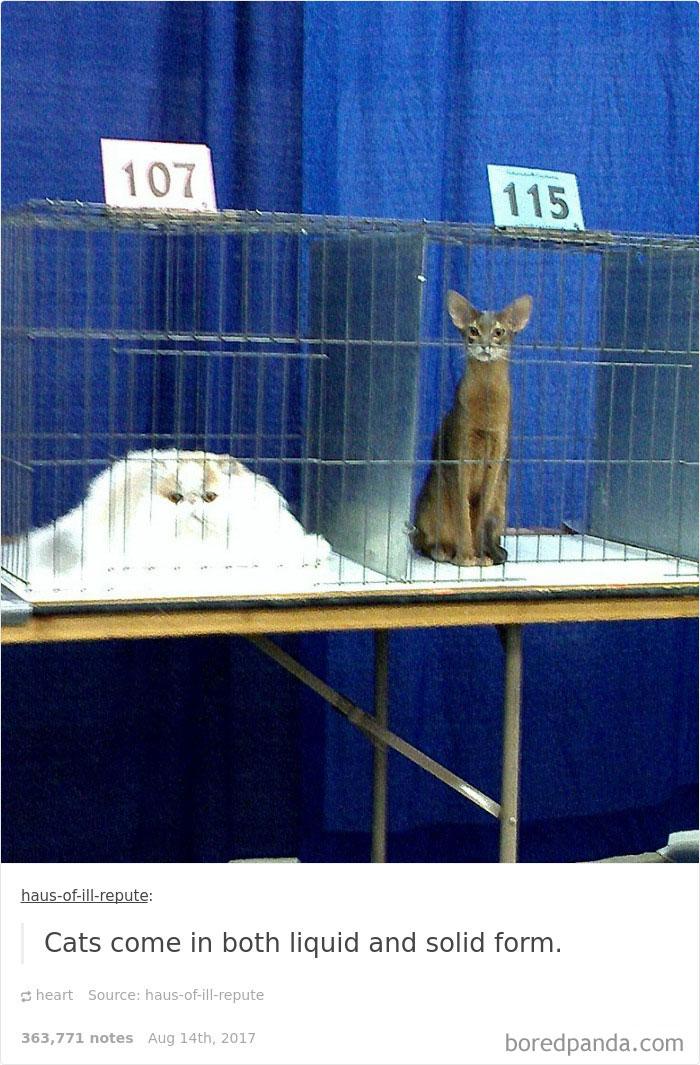 funny-cat-pics-tumblr-11-5992f87ae5324__700