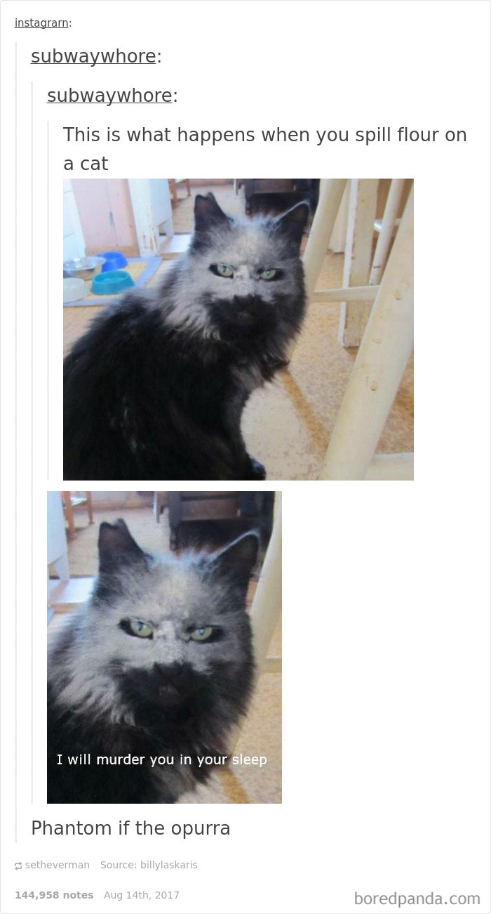 funny-cat-pics-tumblr-110-5992fbb1a8c5f__700