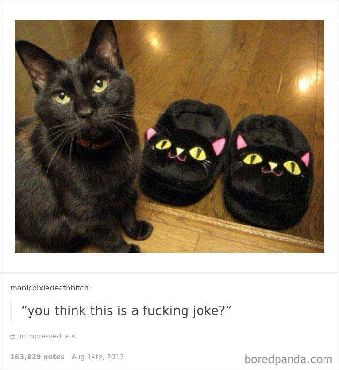 funny-cat-pics-tumblr-112-5992fd9787446__700