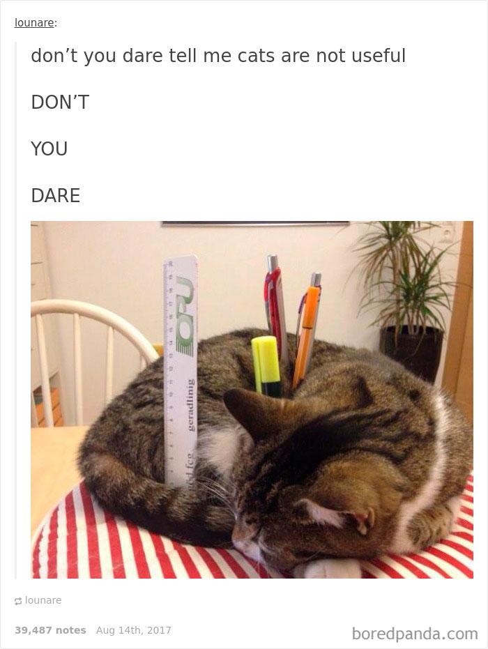 funny-cat-pics-tumblr-115-5993002eba83a__700