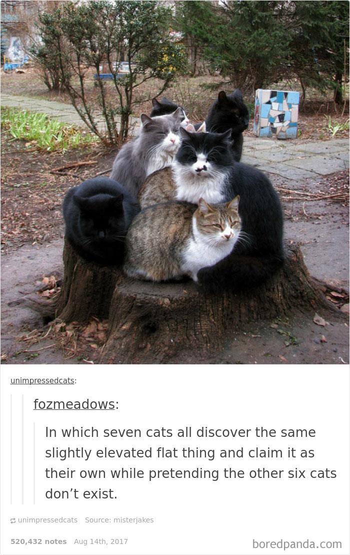 funny-cat-pics-tumblr-12-5992f8b77b5ea__700