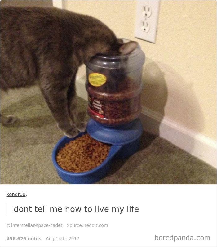 funny-cat-pics-tumblr-24-5992fbcff15ae__700