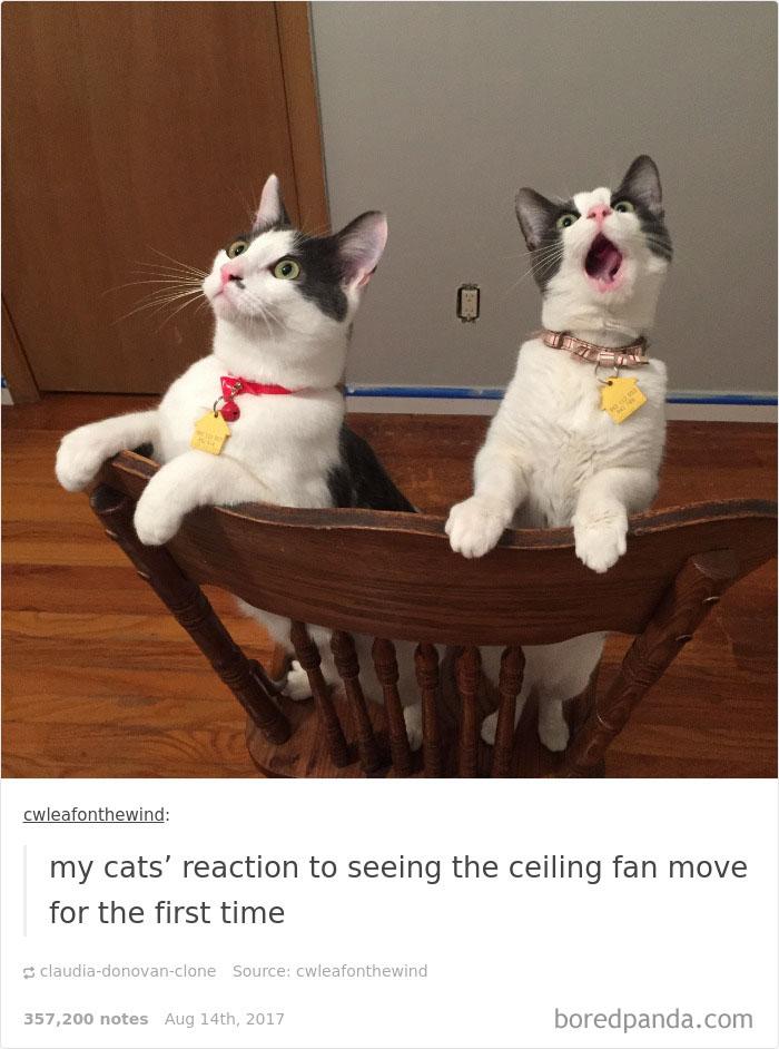 funny-cat-pics-tumblr-26-5992fc197c1a5__700