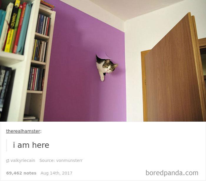 funny-cat-pics-tumblr-29-5992fca06cd0e__700