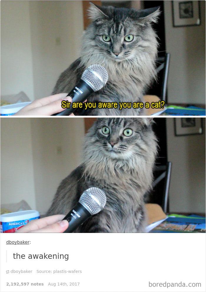 funny-cat-pics-tumblr-30-5992fccb40ec4__700