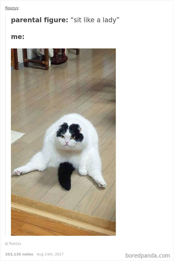 funny-cat-pics-tumblr-4-5992e64bd35b7__700