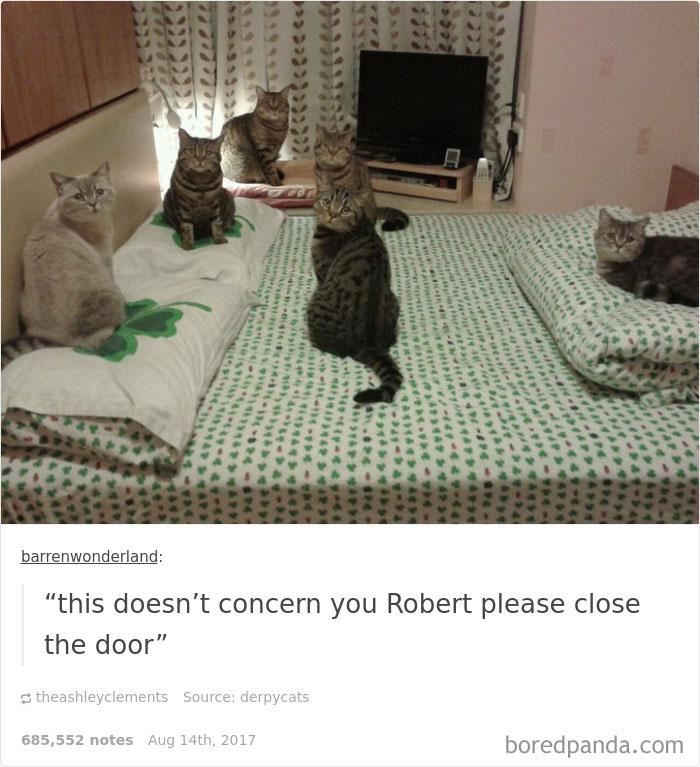 funny-cat-pics-tumblr-5-5992e67a08043__700