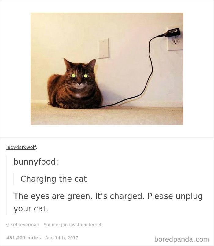 funny-cat-pics-tumblr-6-5992e6a989878__700