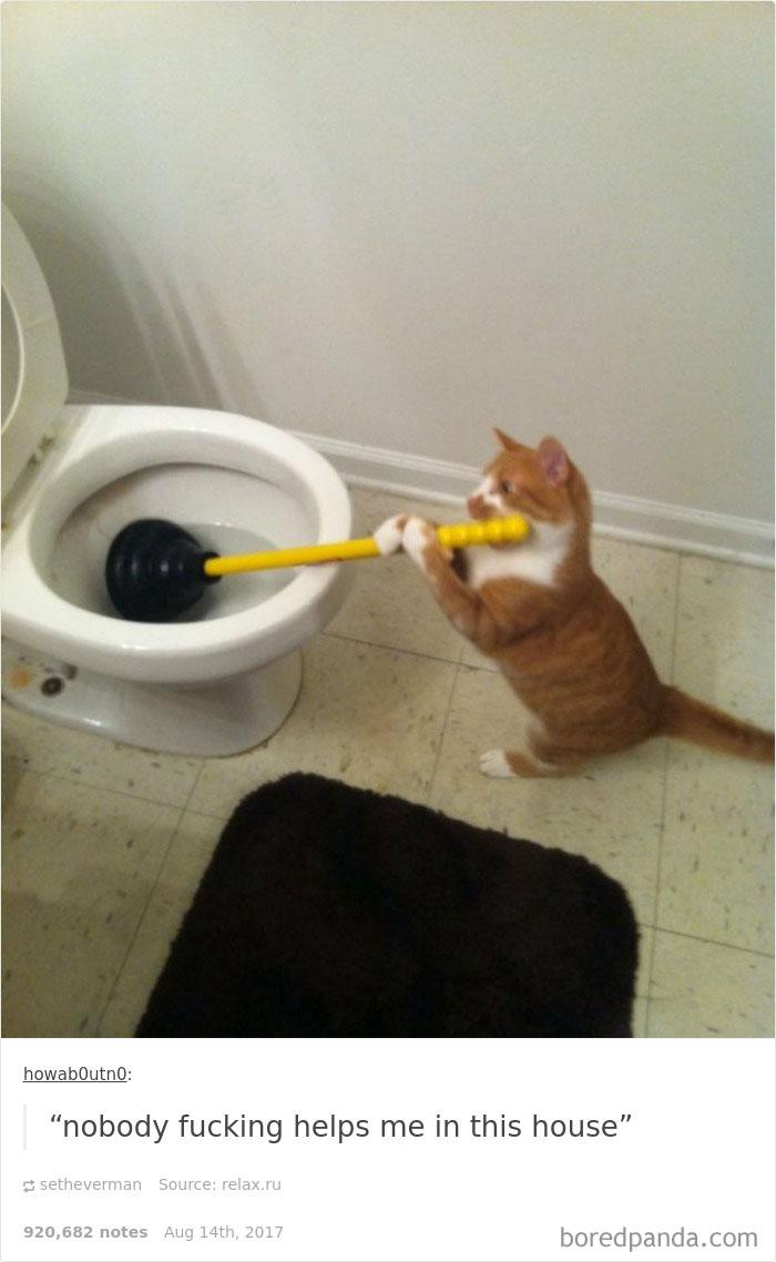 funny-cat-pics-tumblr-8-5992e70e70b95__700