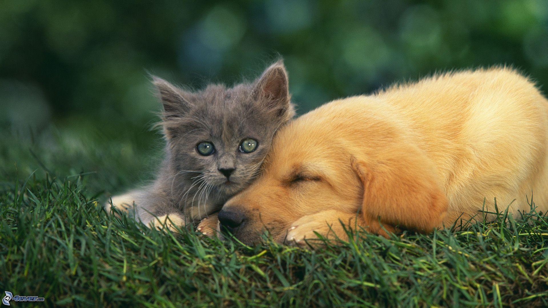 gato-y-perro-159317
