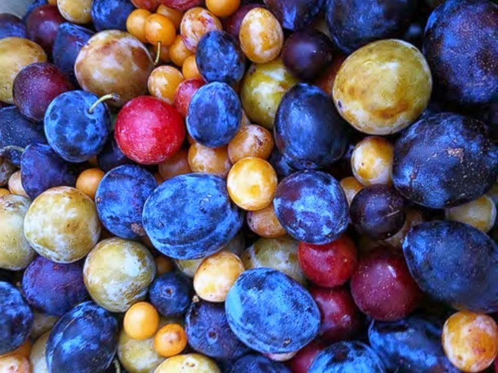 HT_stone_fruit_tree_2_jtm_140723_4x3_992