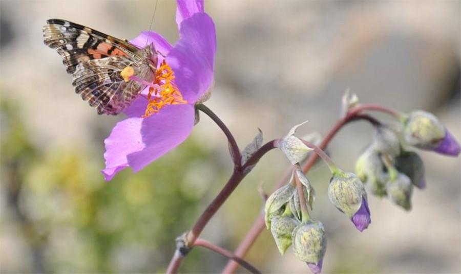 mariposas-flores.jpg.imgw.1280.1280