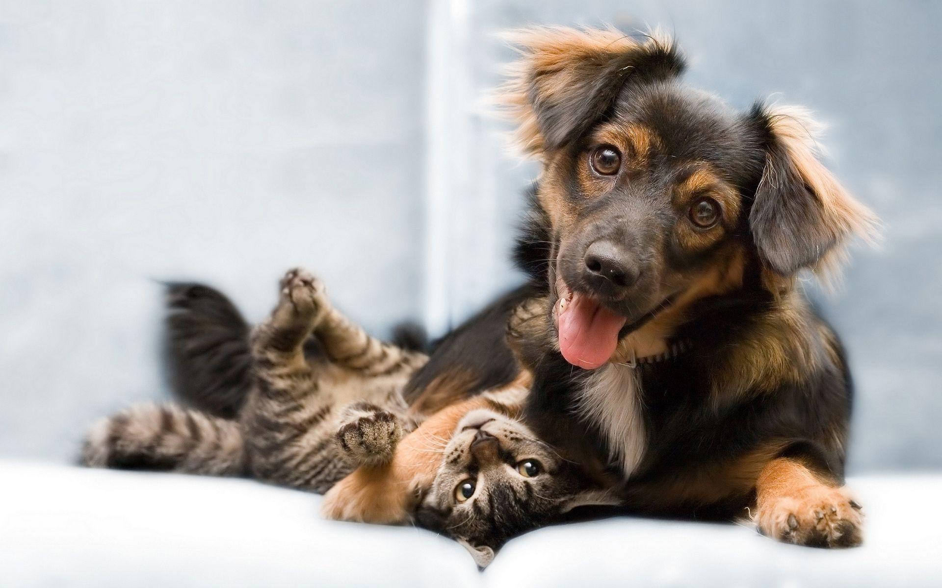 perro-gato-amigos