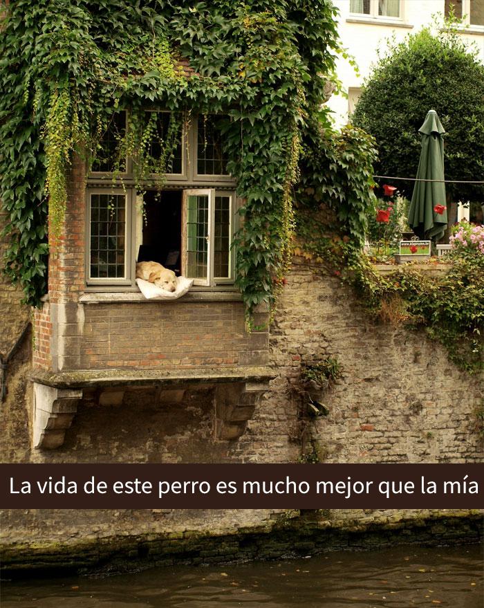 perros-mimados-1-59c4cf8009425__700